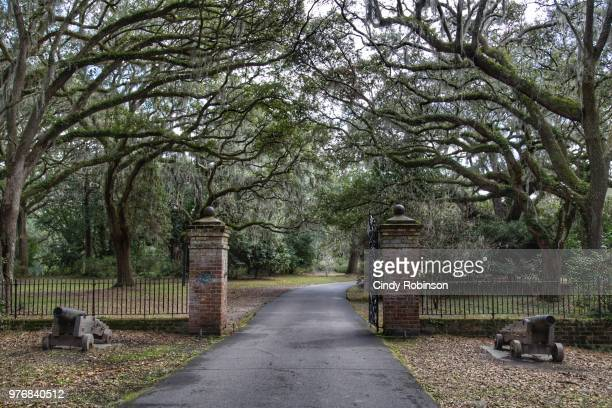 southern landscape - spanish moss stock pictures, royalty-free photos & images