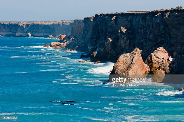 southern right whales at bunda cliffs australia - south australia stock photos and pictures