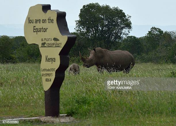 A southern white Rhino with her calf forage at the at the olPejeta conservance just close to a marker for the equator in Nanyuki on May 23 2015 AFP...