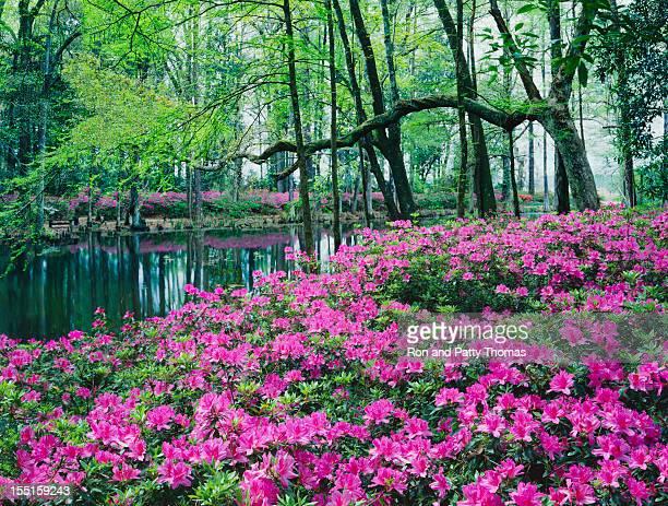 Southern Woodland Garden