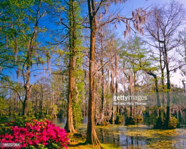 Southern Woodland Garden  (P)