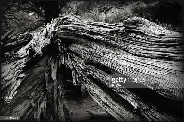 Southwest: Decayed Wood, Black and White