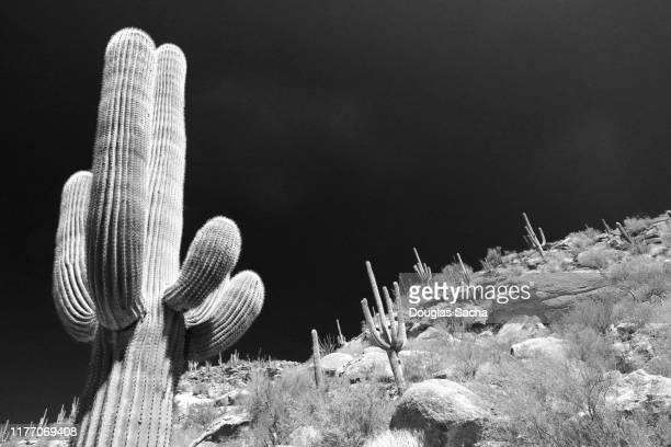 southwestern desert - mexico black and white stock pictures, royalty-free photos & images