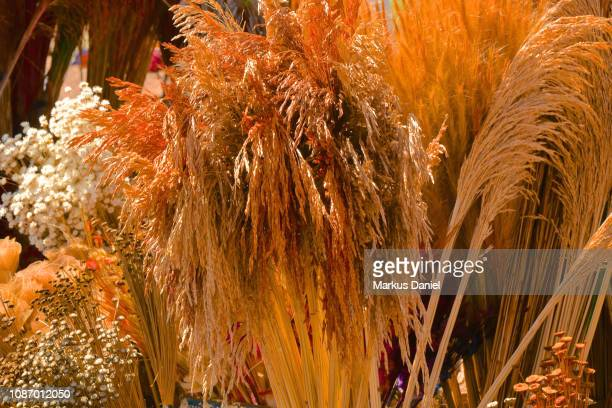 Souvenir Colorful Dried Plants near the Cathedral Of Brasilia