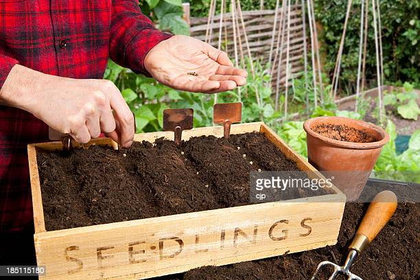 Sowing Vegetable Seeds