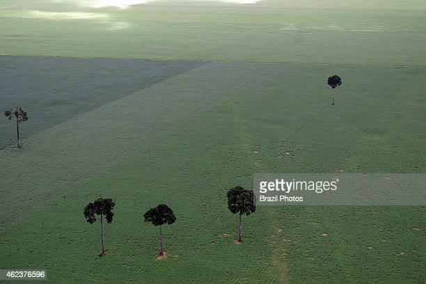 Soy plantation in Amazon rainforest near Santarem deforestation for the agribusiness economic development creating environmental degradation isolated...