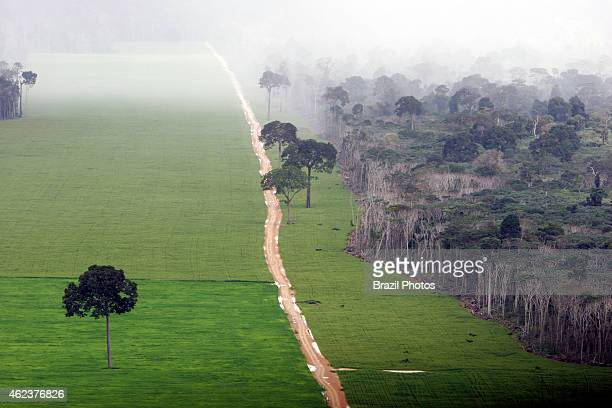 Soy plantation in Amazon rainforest near Santarem deforestation for the agribusiness economic development creating environmental degradation isolated...