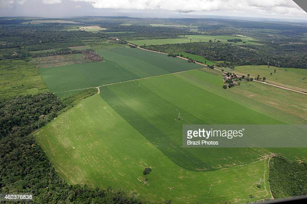 Soy plantation in Amazon rainforest near Santarem deforestation for the agribusiness economic development creating environmental degradation