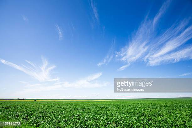 soya fields - soybean harvest stock pictures, royalty-free photos & images
