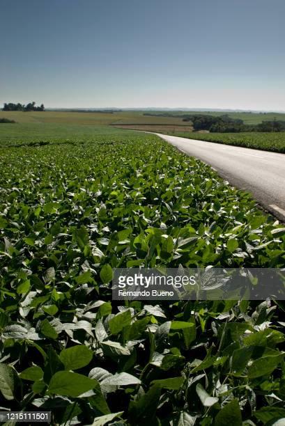 soybean and road - realeza bildbanksfoton och bilder