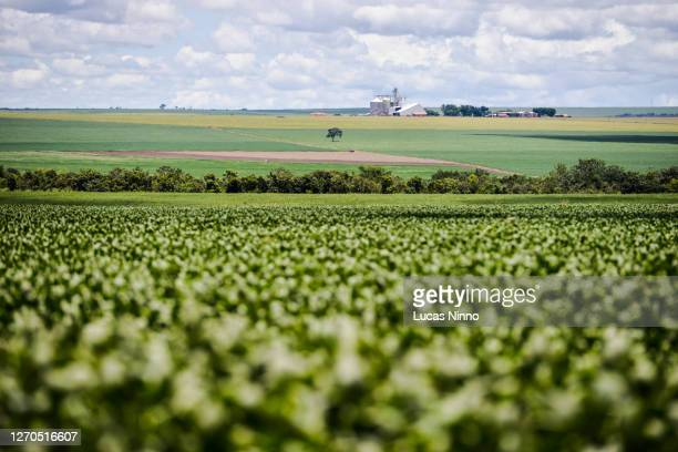 soybean farm in brazil - brazil stock pictures, royalty-free photos & images