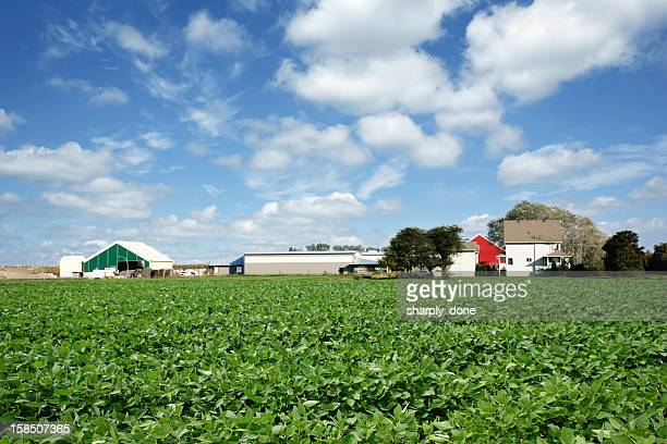 xxl soybean farm - ohio stock photos and pictures