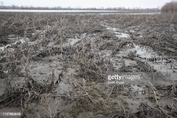A soybean field is covered in mud as floodwater recedes on March 23 2019 near Union Nebraska Damage estimates from flooding in Nebraska top $1...