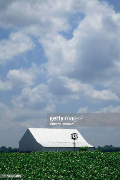 soybean field with barn, windmill, tree line and cloud-filled sky beyond - timothy hearsum bildbanksfoton och bilder