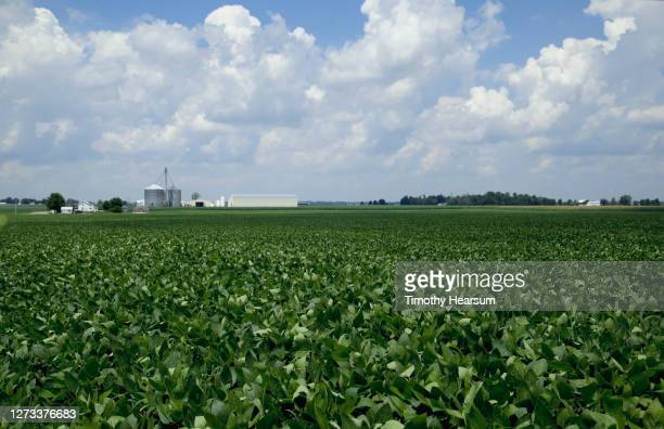 soybean field with farm buildings, tree line and cloud filled sky beyond - timothy hearsum stock-fotos und bilder