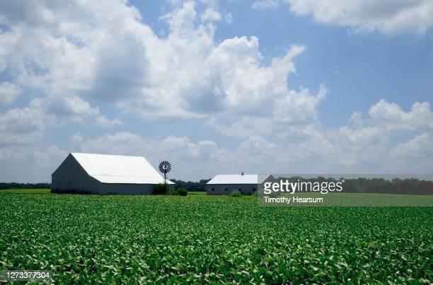 soybean field with two barns, windmill, tree line and cloud-filled sky beyond - timothy hearsum bildbanksfoton och bilder