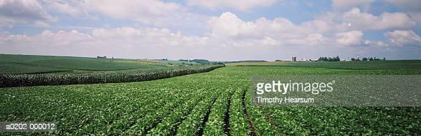 soybean fields - timothy hearsum photos et images de collection