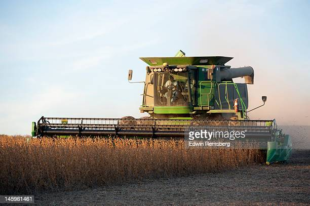 soybean harvest - combine harvester stock pictures, royalty-free photos & images