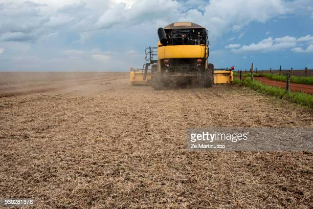 soybean harvest - harvest festival stock pictures, royalty-free photos & images