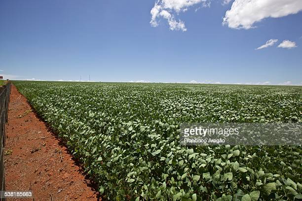 soybean planting - cerrado stock pictures, royalty-free photos & images