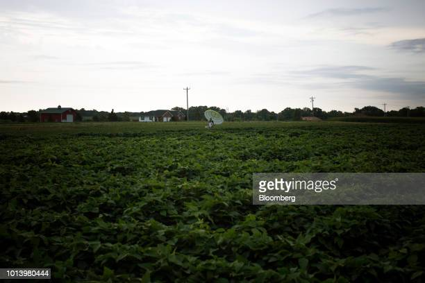 Soybean plants grow in a field at the Bay Farm Research Facility in Columbia Missouri US on Thursday July 19 2018 Grainpriceshave been enjoying a...