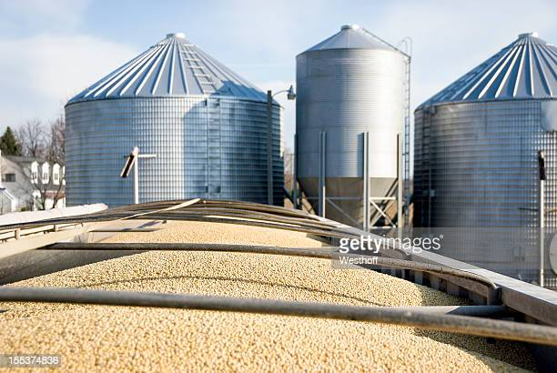 soybean transport - soybean stock pictures, royalty-free photos & images