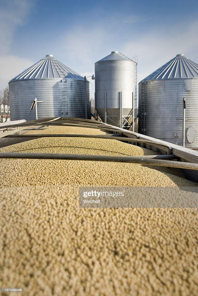 Fagiolo di soia trasporto : Foto stock