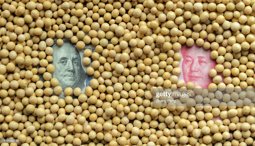 Soybeans and Banknotes of US Dollar VS RMB, arranged for... : News Photo