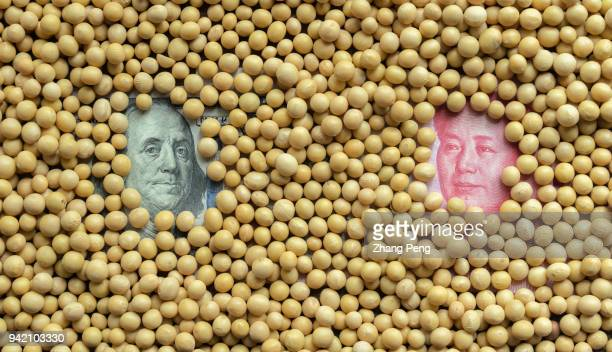 Soybeans and Banknotes of US Dollar VS RMB arranged for photography On April 4th the US government issued a Customs duty list which would impose a...