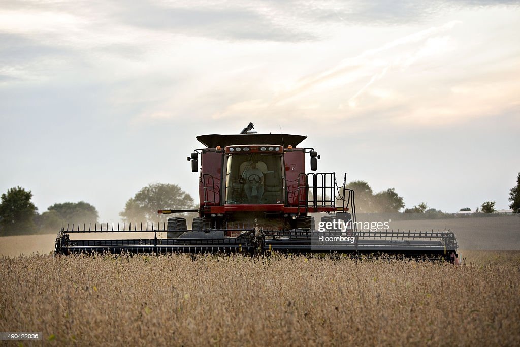 Soybeans Fall From One-Week High : News Photo