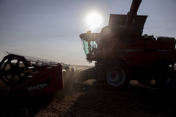 IL: A Soybean Harvest As Futures Extend Drop Below $10