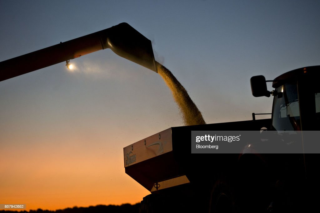 Soybeans are unloaded from a Case IH Agricultural Equipment Inc. combine harvester at dusk during harvest in Buda, Illinois, U.S., on Friday, Sept. 29, 2017. Soybean futures for November delivery rose 0.1% a bushel on the Chicago Board of Trade after falling as much as 0.5%, the lowest since September 13. Photographer: Daniel Acker/Bloomberg via Getty Images