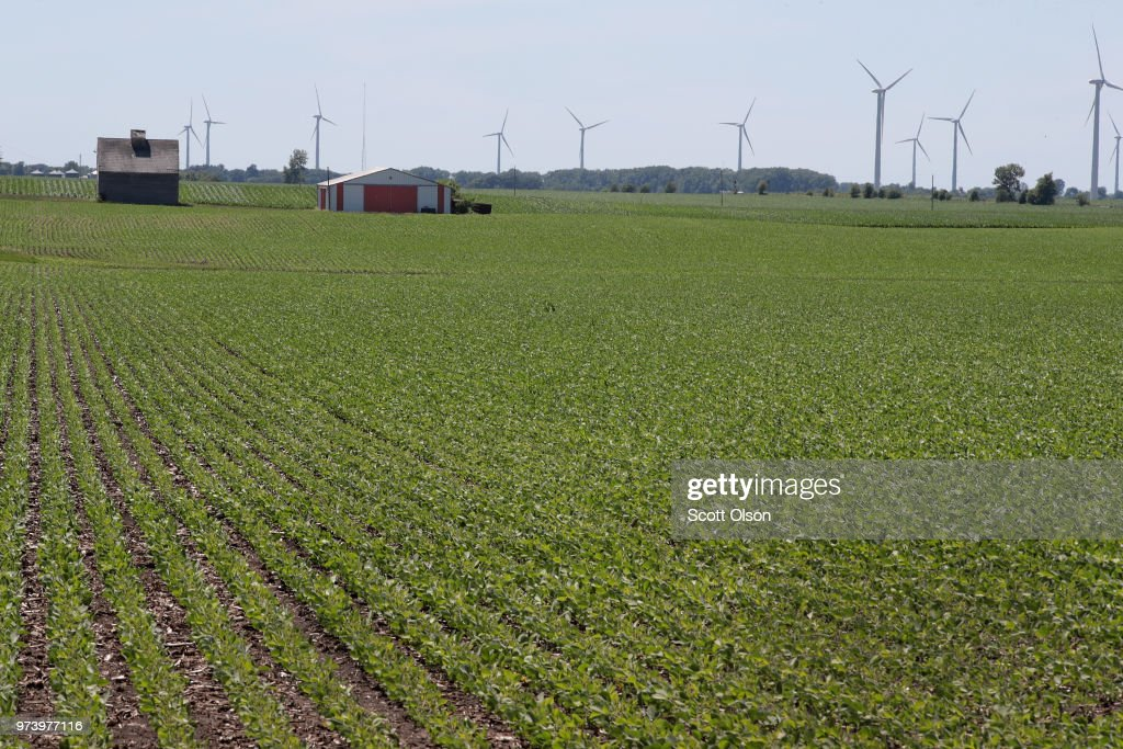 Soybeans grow in a field on June 13, 2018 in Dwight, Illinois. The condition of U.S. corn and soybean crops in most regions is far outpacing last year's condition at this point in the season.