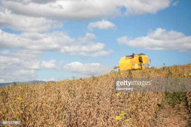 Soybeans stand in a field as a New Holland Tractor Ltd combine machine harvests at the Santa Cruz farm near Atibaia Brazil on Wednesday March 29 2017...