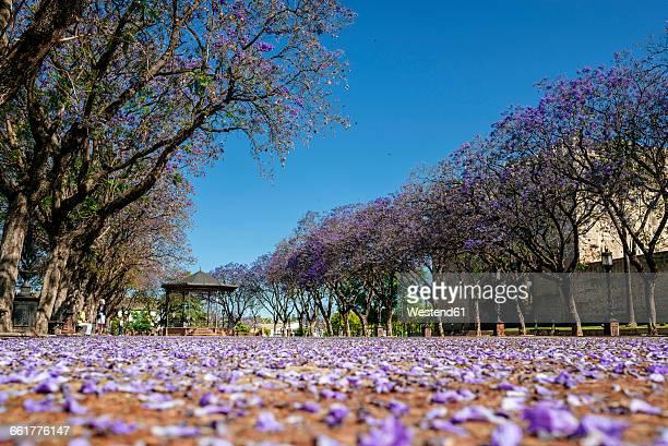 Spain, Andalusia, Cadiz, Jerez de la Frontera, Alameda Vieja walkway