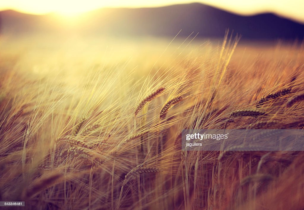 Spain, Andalusia, Loja, Field at sunset : Foto de stock