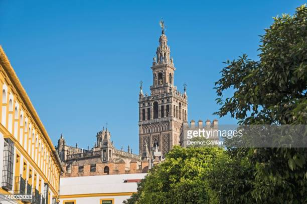 Spain, Andalusia, Seville, La Giralda bell tower of Seville cathedral with tree top in foreground