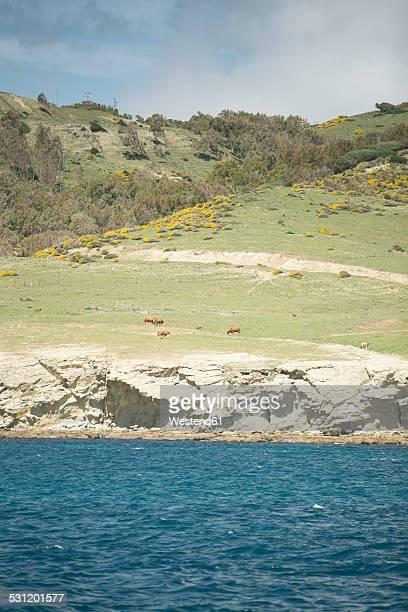 Spain, Andalusia, Tarifa, steep coast, cows on grazing land