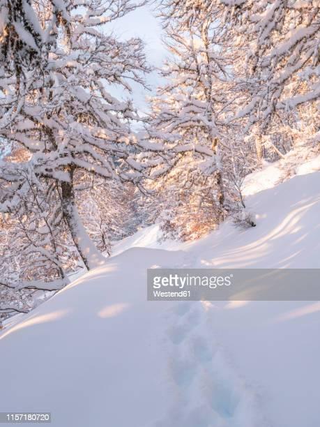 spain, asturia, picos de europa, mirador de piedrashistas, mountain forest in winter - diepe sneeuw stockfoto's en -beelden