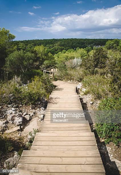 spain, balearic islands, menorca, boardwalk into the woods in cala macarella - カラマカレラ ストックフォトと画像
