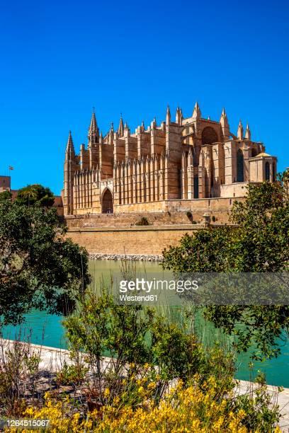 spain, balearic islands, palma de mallorca, palma cathedral on sunny day - palma de mallorca bildbanksfoton och bilder