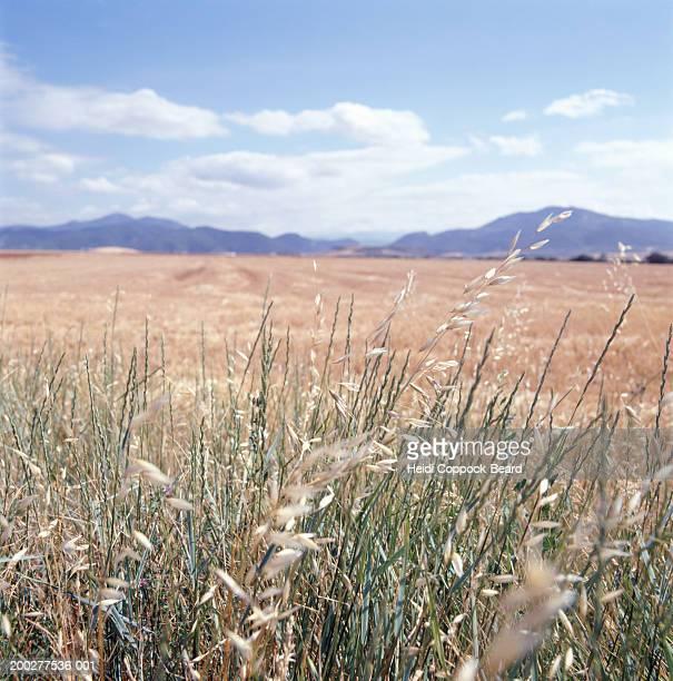 Spain, Basque country landscape