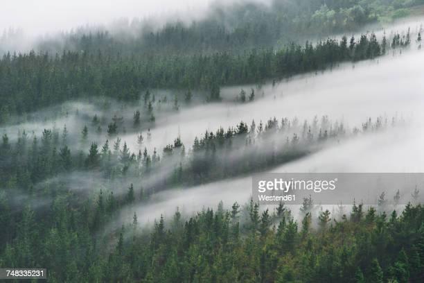 spain, basque country, mist in the forest of oiz - niebla fotografías e imágenes de stock