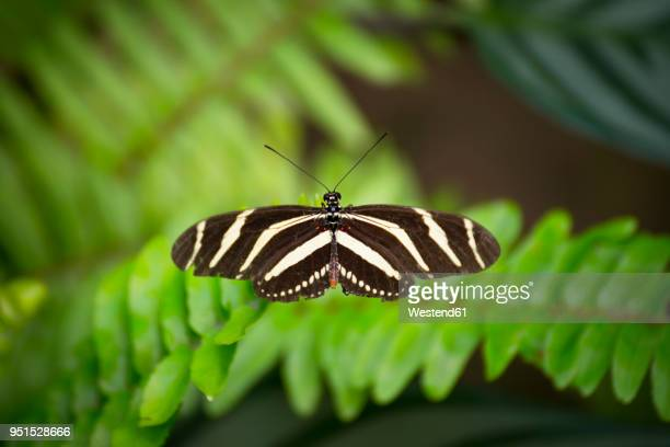Spain, Canary Islands, butterfly on leaf