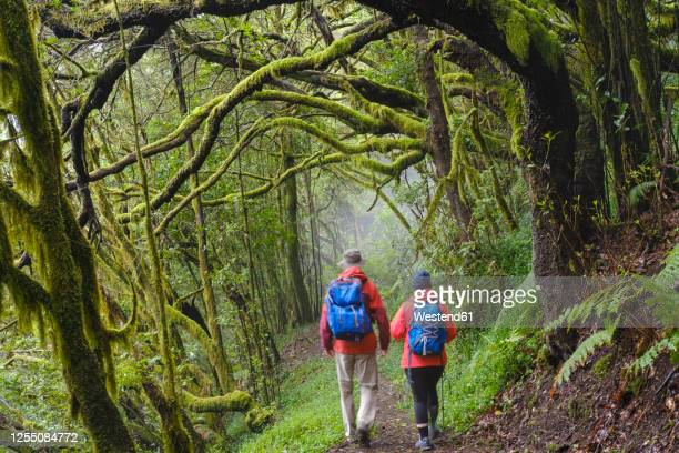 spain, canary islands, la gomera, couple hiking along forest footpath ingarajonay national park - national landmark stock pictures, royalty-free photos & images