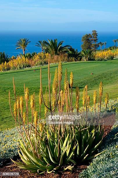 Spain Canary Islands La Gomera Playa Santiago Hotel Jardin Tecina Golf Club