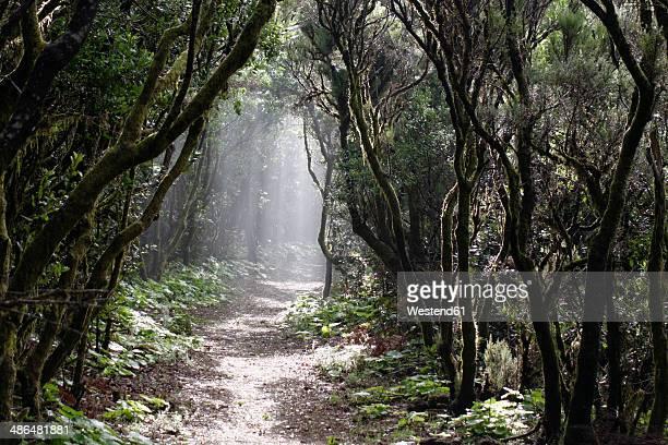 Spain, Canary Islands, La Palma, Cumbre Nueva, Cloud forest