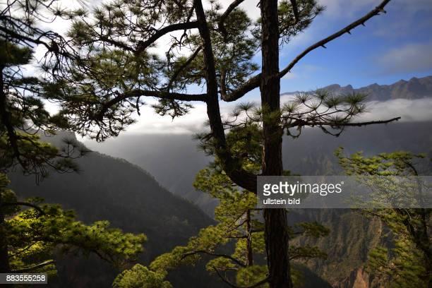 ESP Spain Canary Islands La Palma In spite of its vulcanic origin like all Canary Islands is La Palma very green Look at the Caldera of Mirador de...