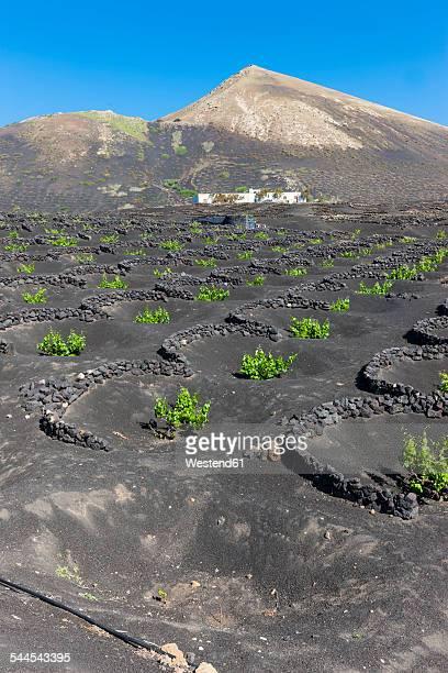 spain, canary islands, lanzarote, la geria, viticulture at volcanic landscape - paisaje volcánico fotografías e imágenes de stock