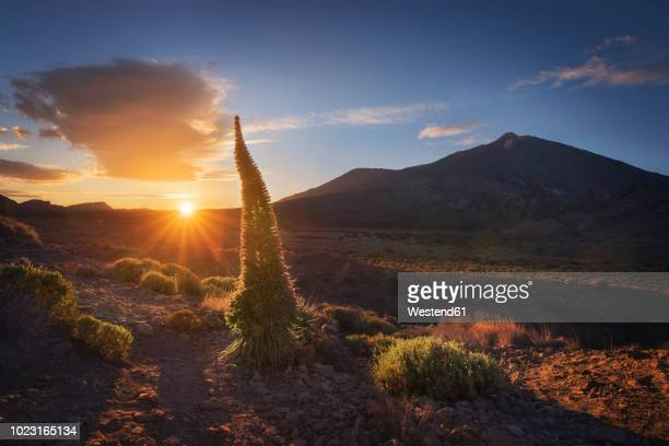 spain, canary islands, tenerife, teide national park at sunset - el teide national park stock pictures, royalty-free photos & images